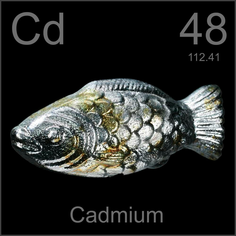 Fish, a sample of the element Cadmium in the Periodic Table